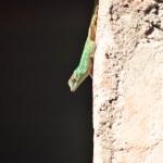 Salamander lizard - adventure story