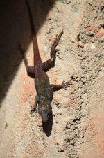 Salamander - adventure story