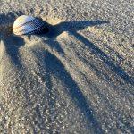 Shell - Adventure Story