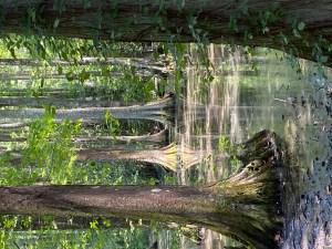 Cypress Trees - Adventure Stories