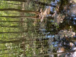Swamp water - Adventure Stories