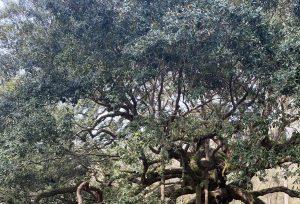 Tree - Adventure Story